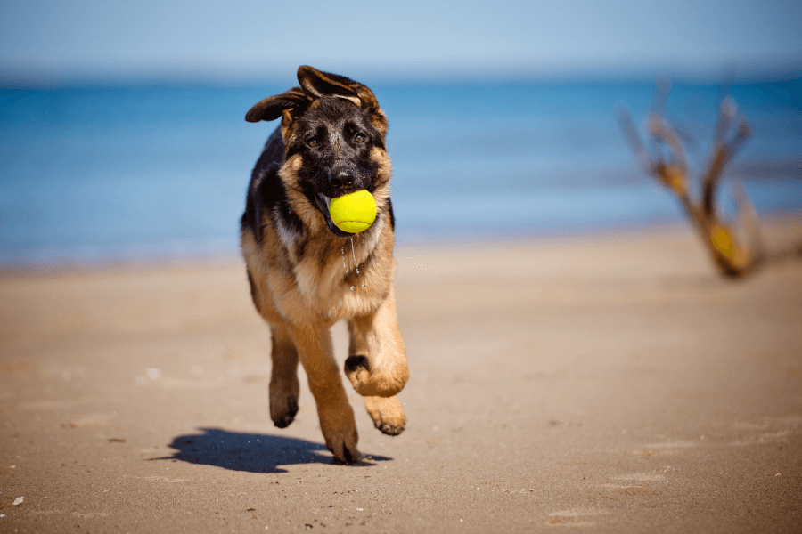Games To Play On The Beach With Your Dog!