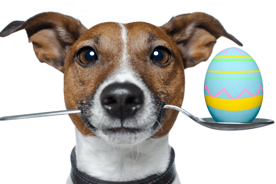 Easter Foods That Are Safe For Your Dog