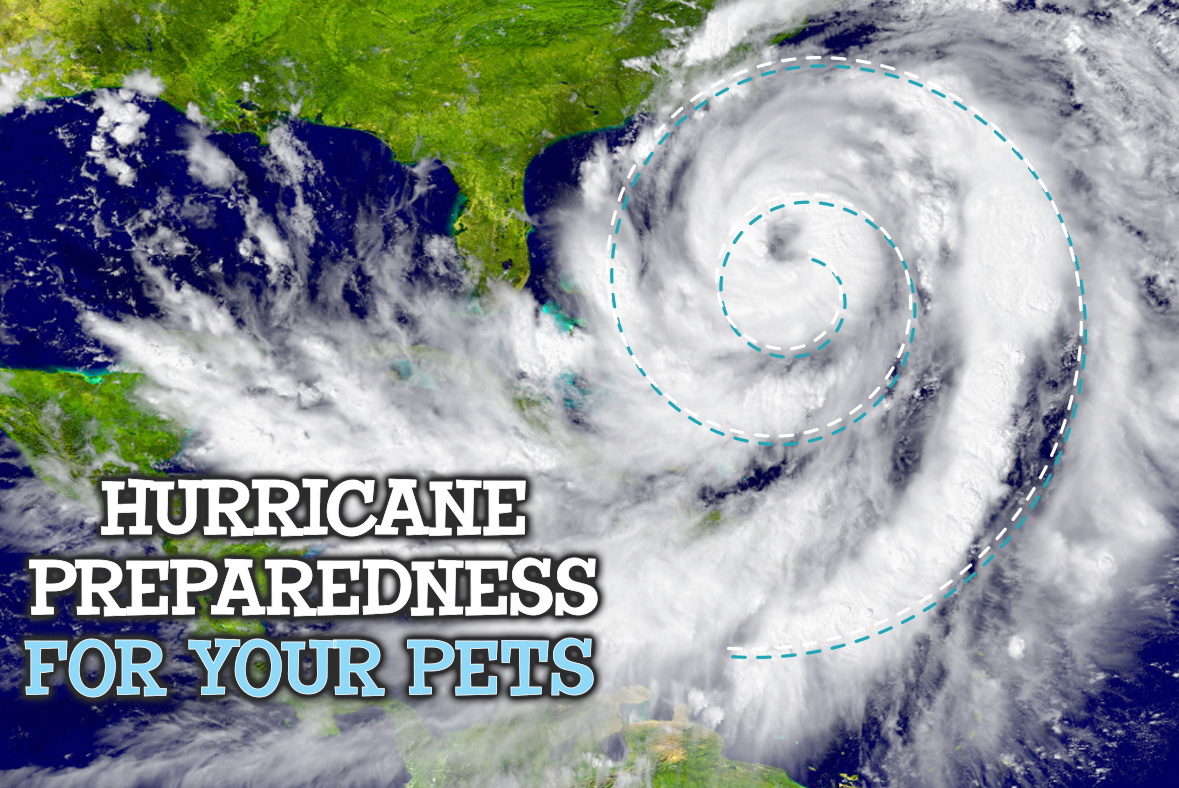 Hurricane Preparedness For Your Pets