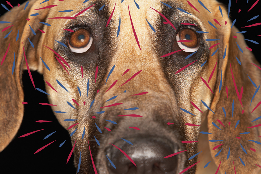 July 4th Firework Safety And Tips for Your Pets