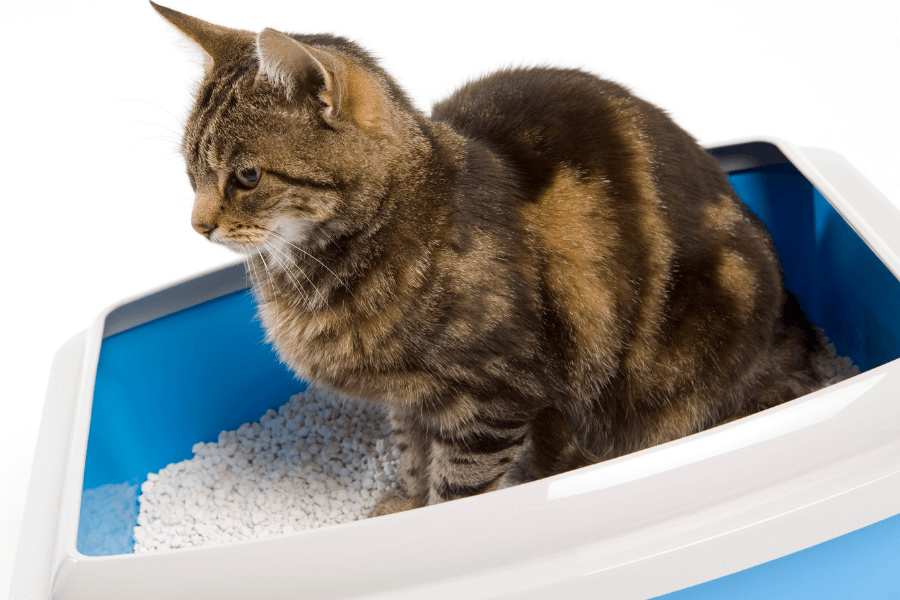 Common Litter Box Issues