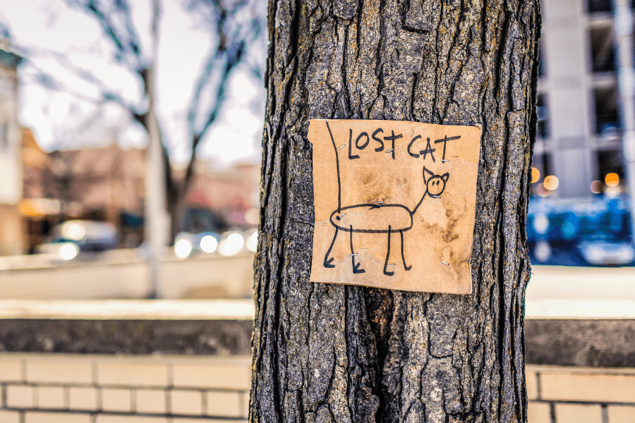 What To Do If Your Pet Becomes Lost