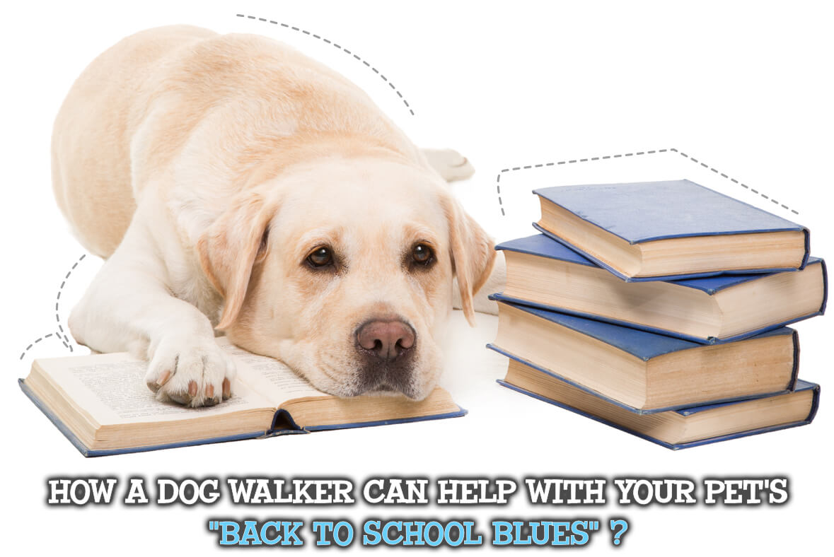 """How A Dog Walker Can Help With Your Pet's """"Back to School Blues""""!"""