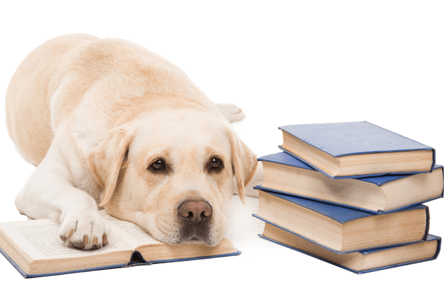 "How A Dog Walker Can Help With Your Pet's ""Back to School Blues""!"