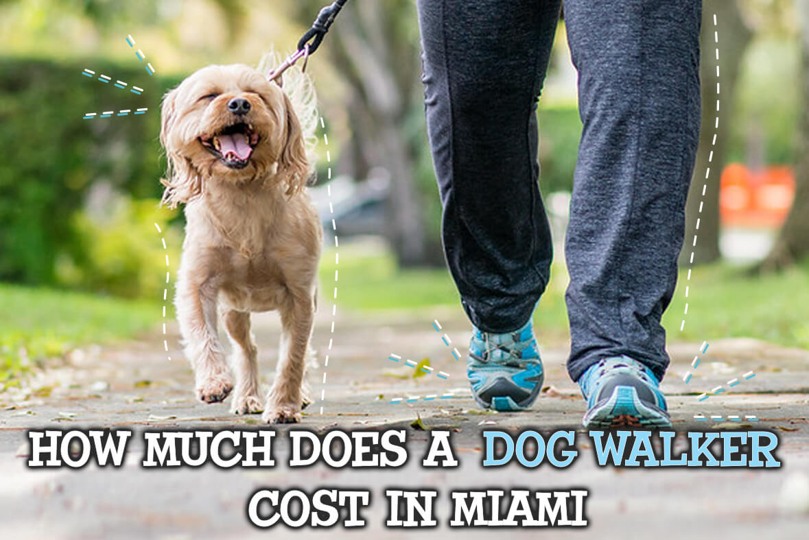 How Much Does A Dog Walker Cost In Miami?
