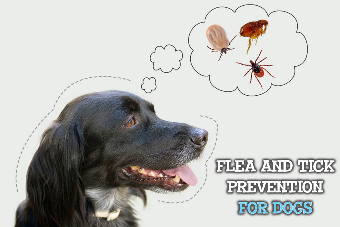 Flea And Tick Prevention For Dogs