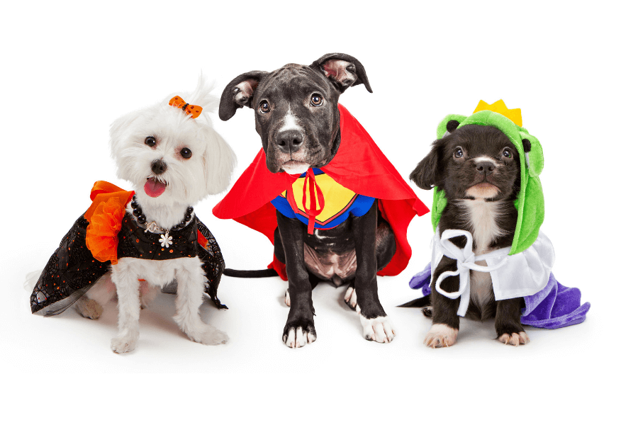 9 Spooky Halloween Costumes For Your Dog