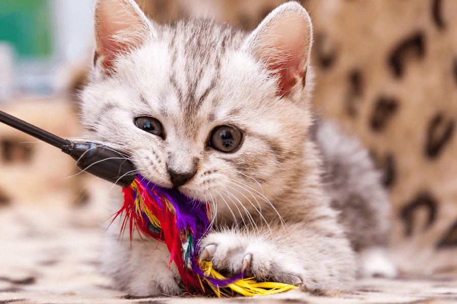 Four Top Toys for Cats this Holiday Season