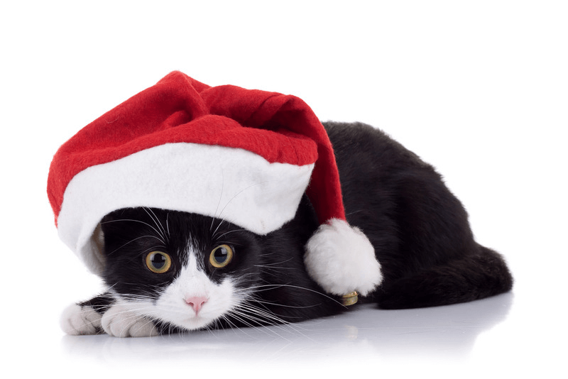 Should I Adopt A Cat For Christmas?