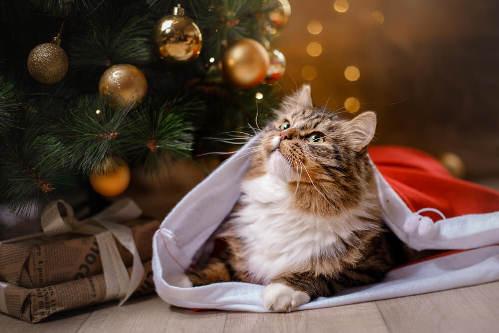 How To Keep Your Cat Safe This Christmas