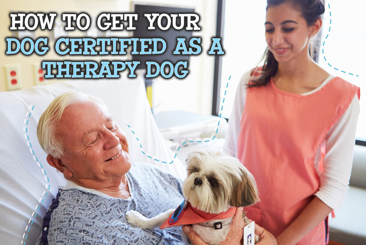 How To Get Your Dog Certified As A Therapy Dog