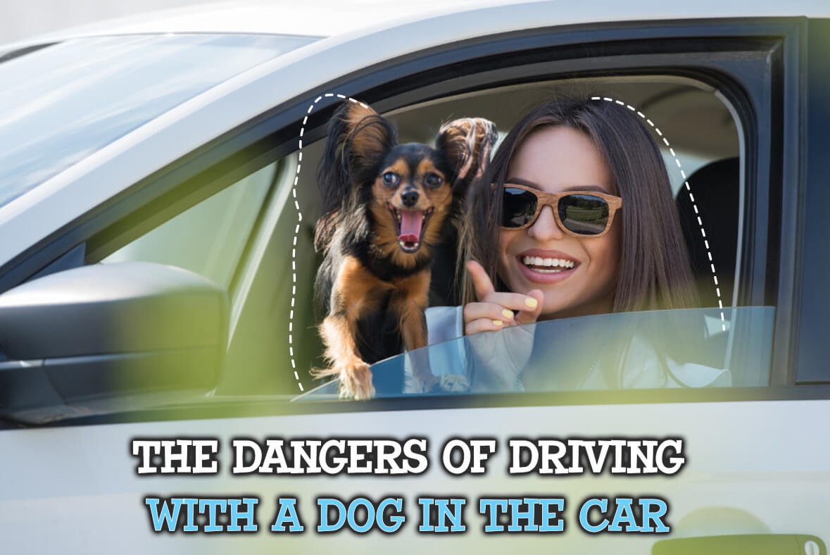 The Dangers Of Driving With A Dog In The Car