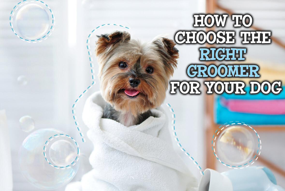 How To Choose The Right Groomer For Your Dog