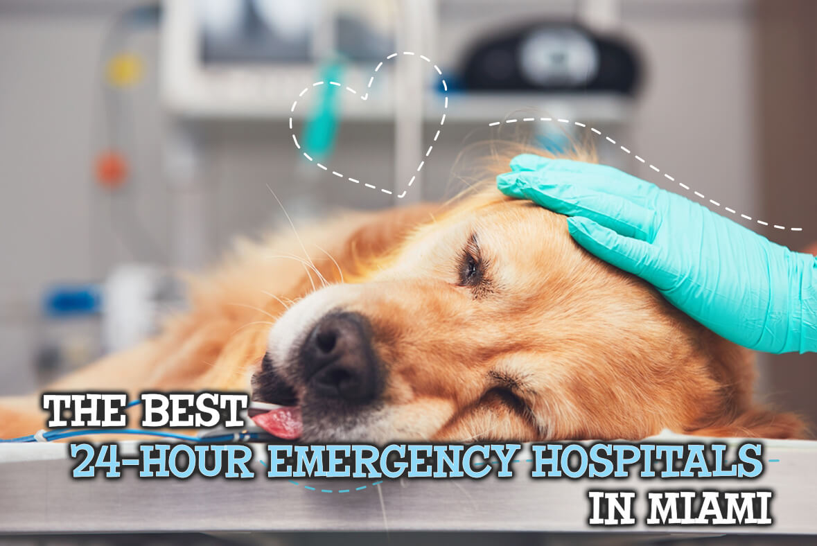 The Best 24-Hour Pet Emergency Hospitals In Miami