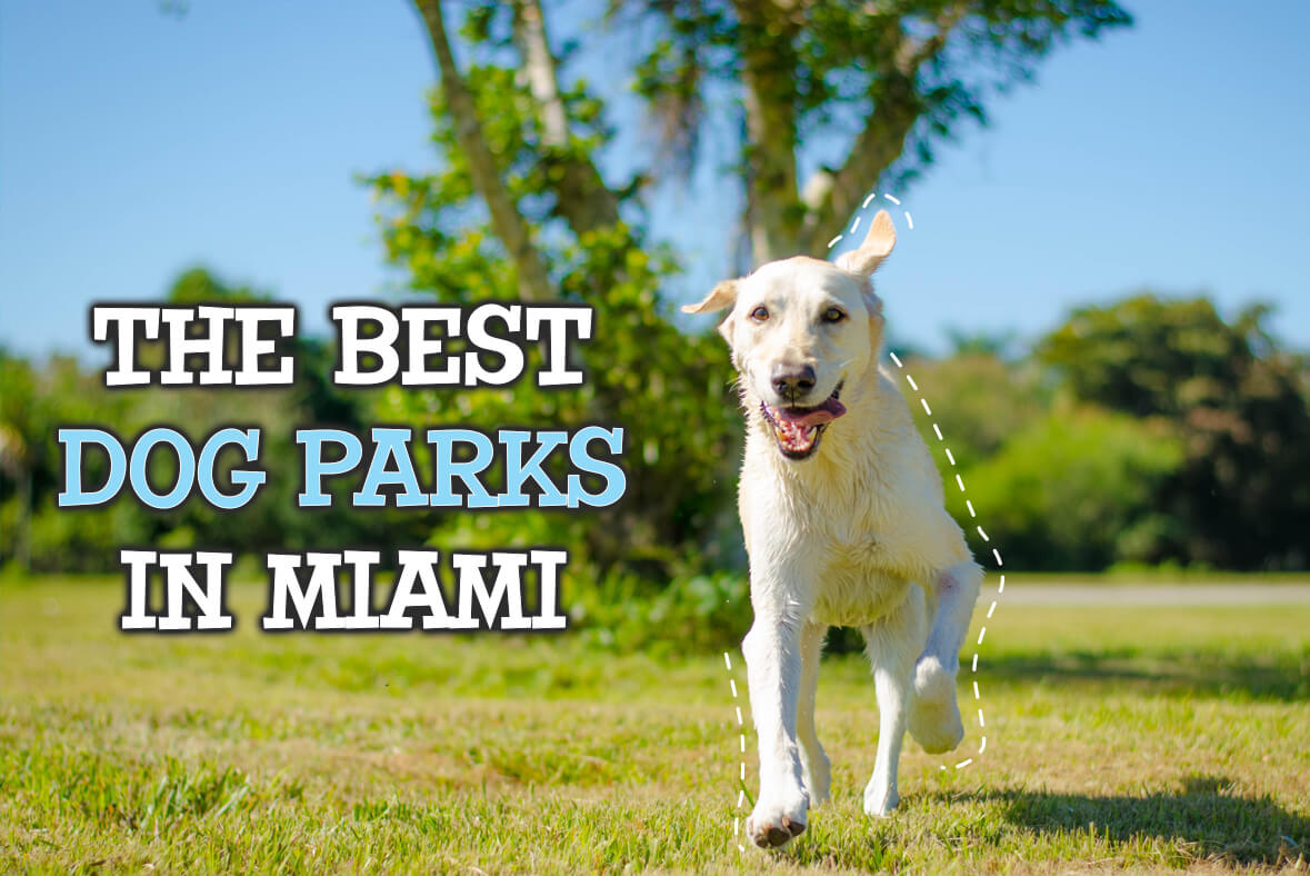 The Best Dog Parks In Miami
