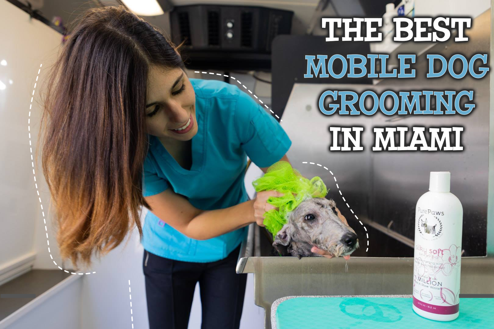 The Best Mobile Dog Grooming In Miami