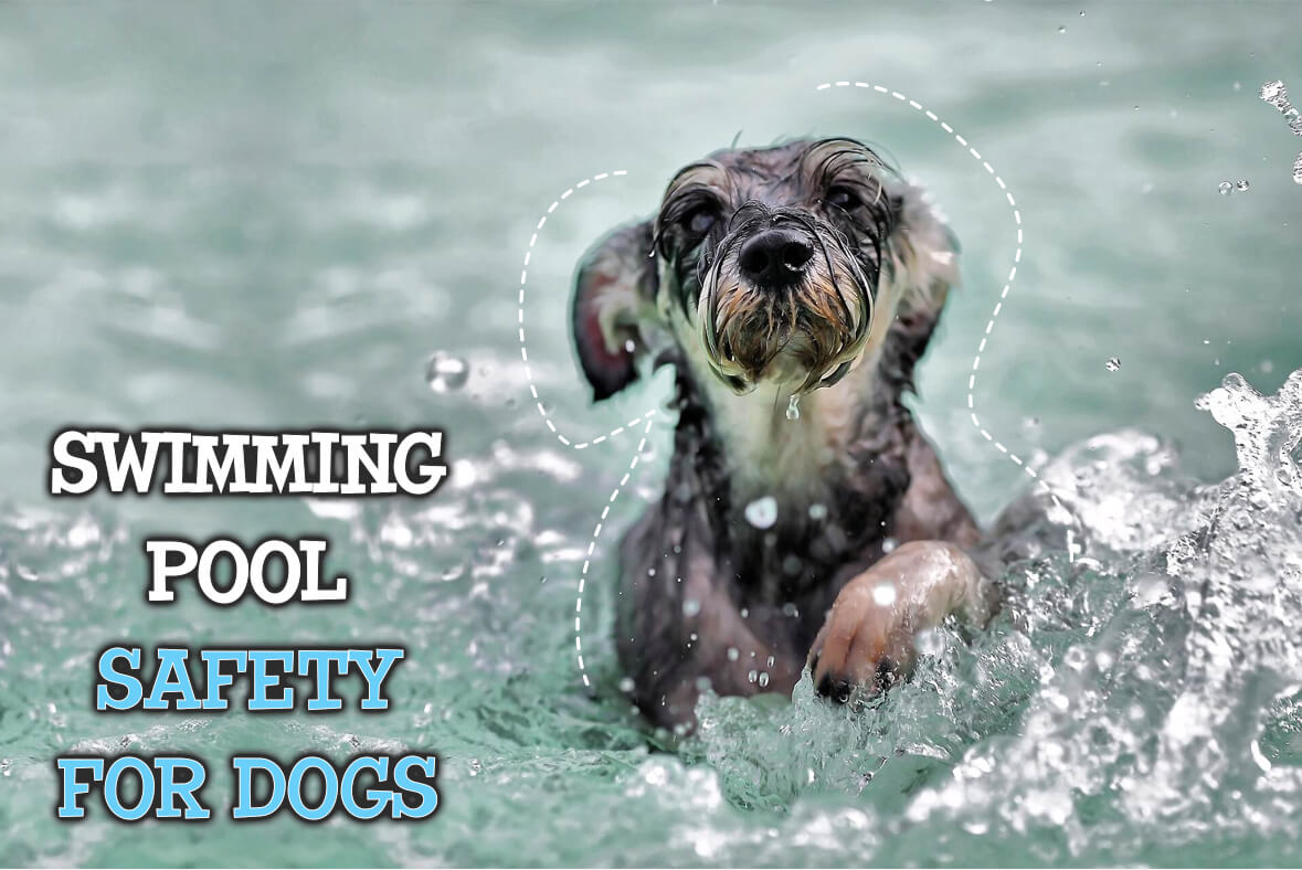 Swimming Pool Safety For Dogs