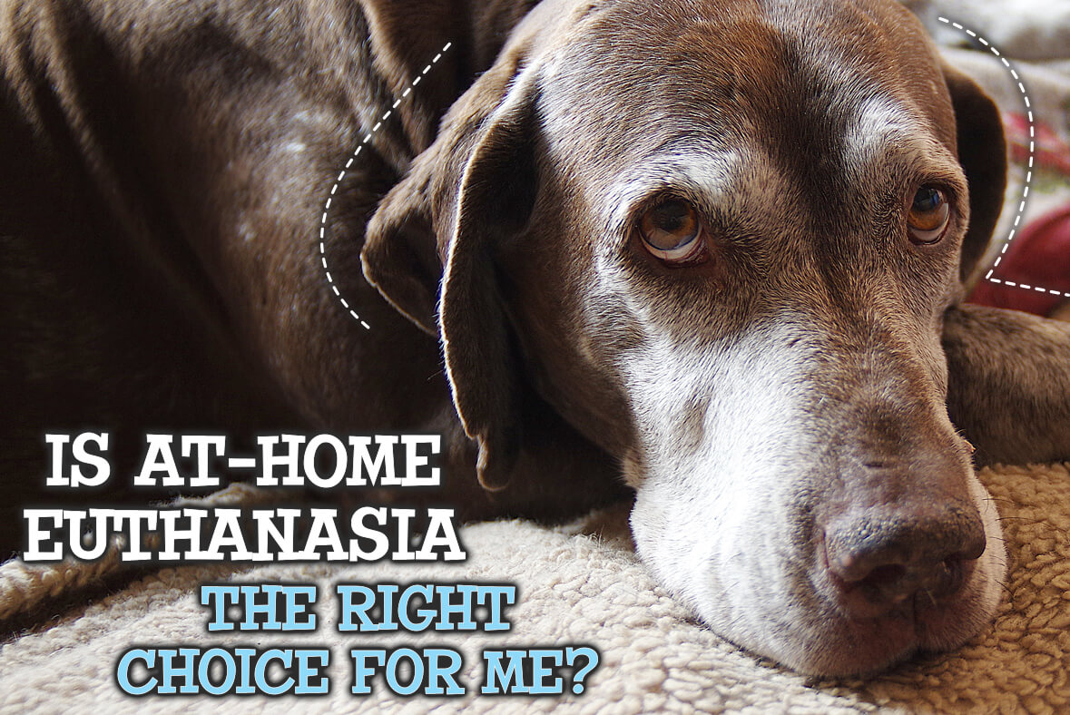 Is At-Home Pet Euthanasia The Right Choice For You?