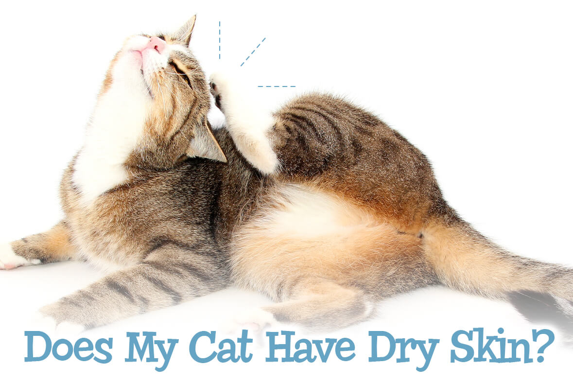 Does My Cat Have Dry Skin?