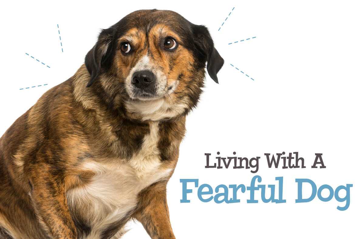 Living With A Fearful Dog
