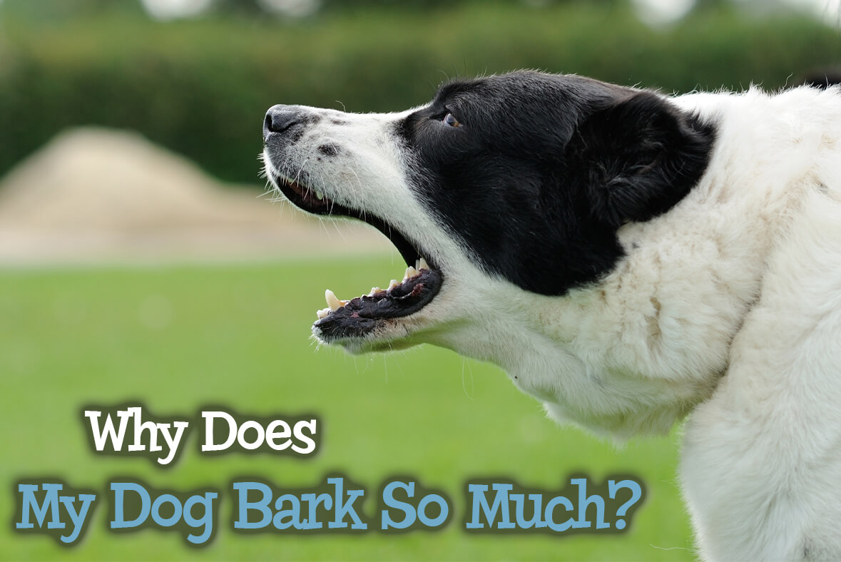 Why Does My Dog Bark So Much?