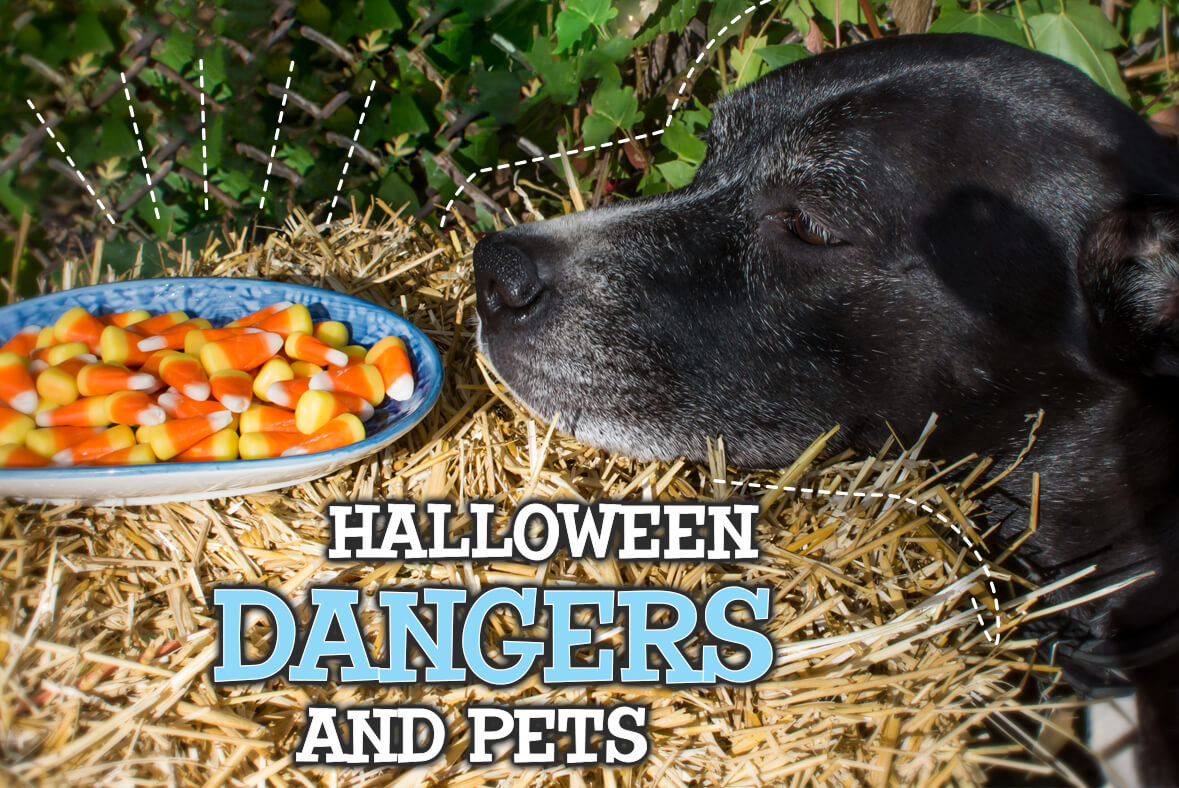Halloween Dangers and Pets