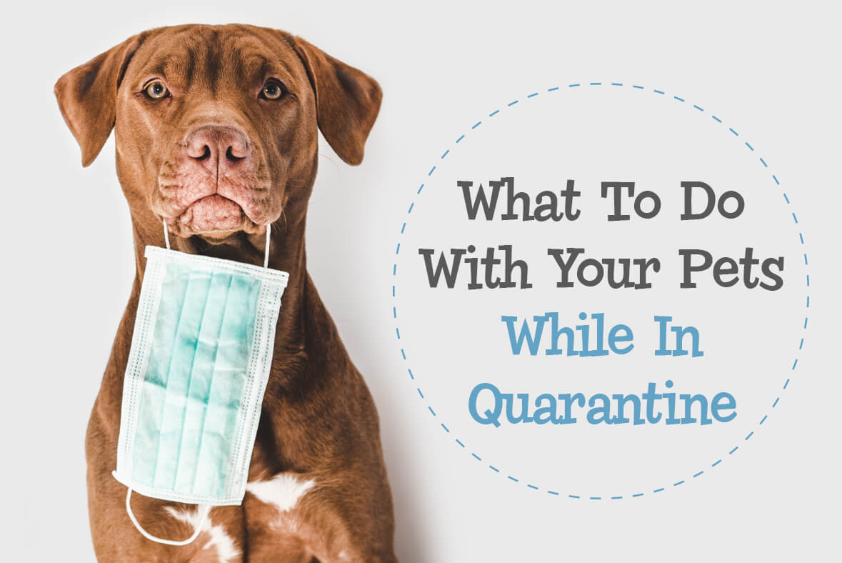 What To Do With Your Pets While In Quarantine