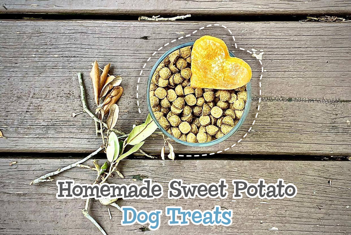Homemade Sweet Potato Dog Treats