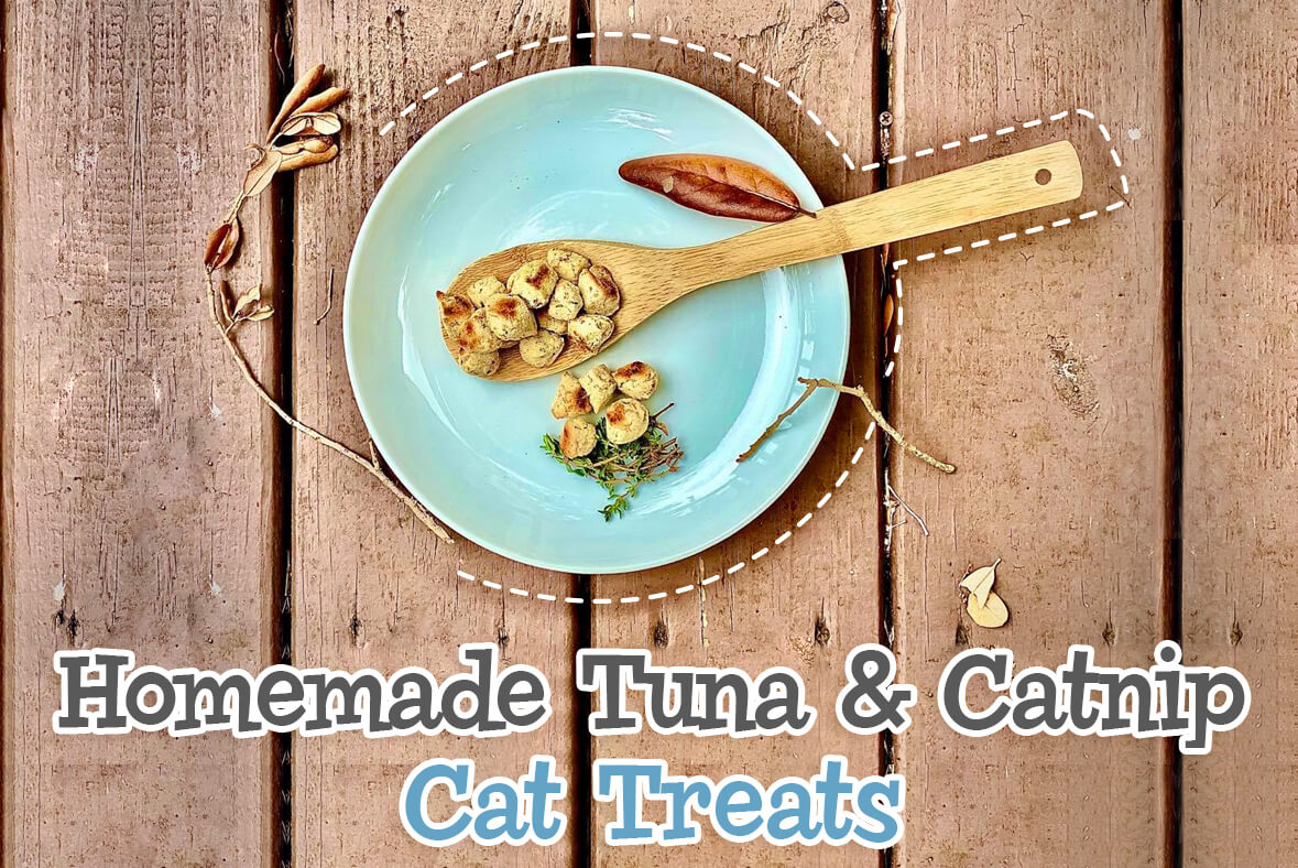 Homemade Tuna And Catnip Cat Treats