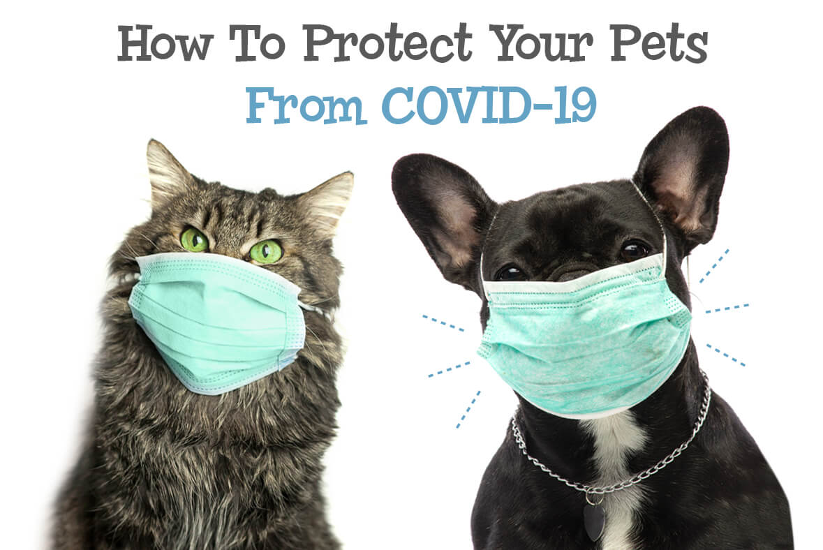 How To Protect Your Pets From COVID-19