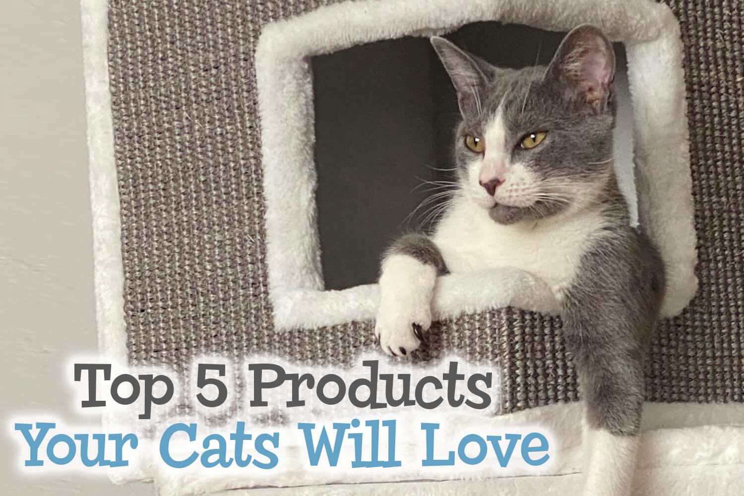 Top 5 Products Your Cats Will Love