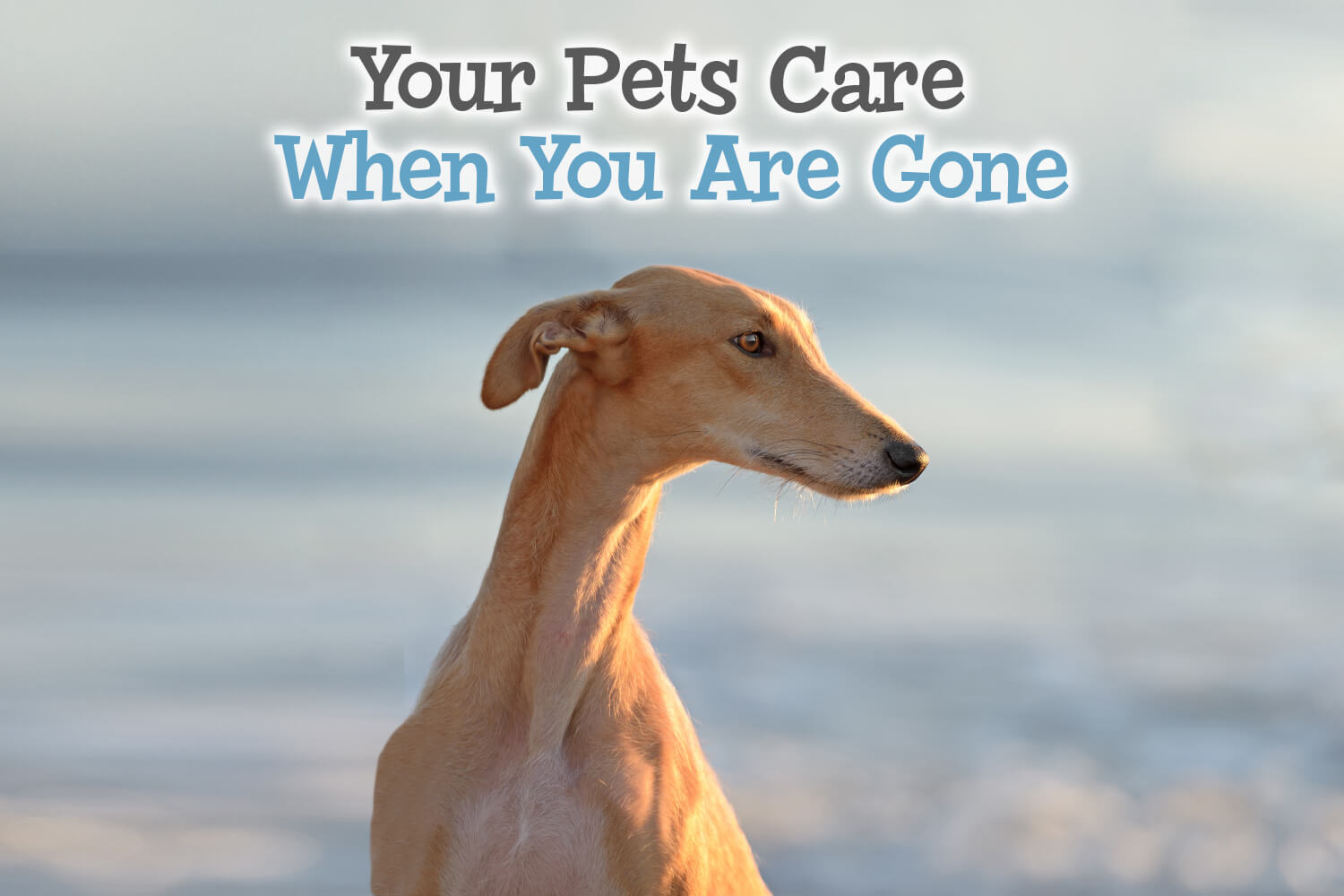 Your Pets Care When You Are Gone