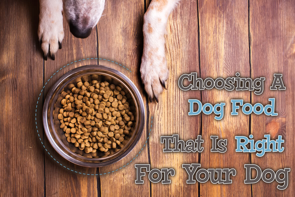 Choosing A Dog Food That Is Right For Your Dog
