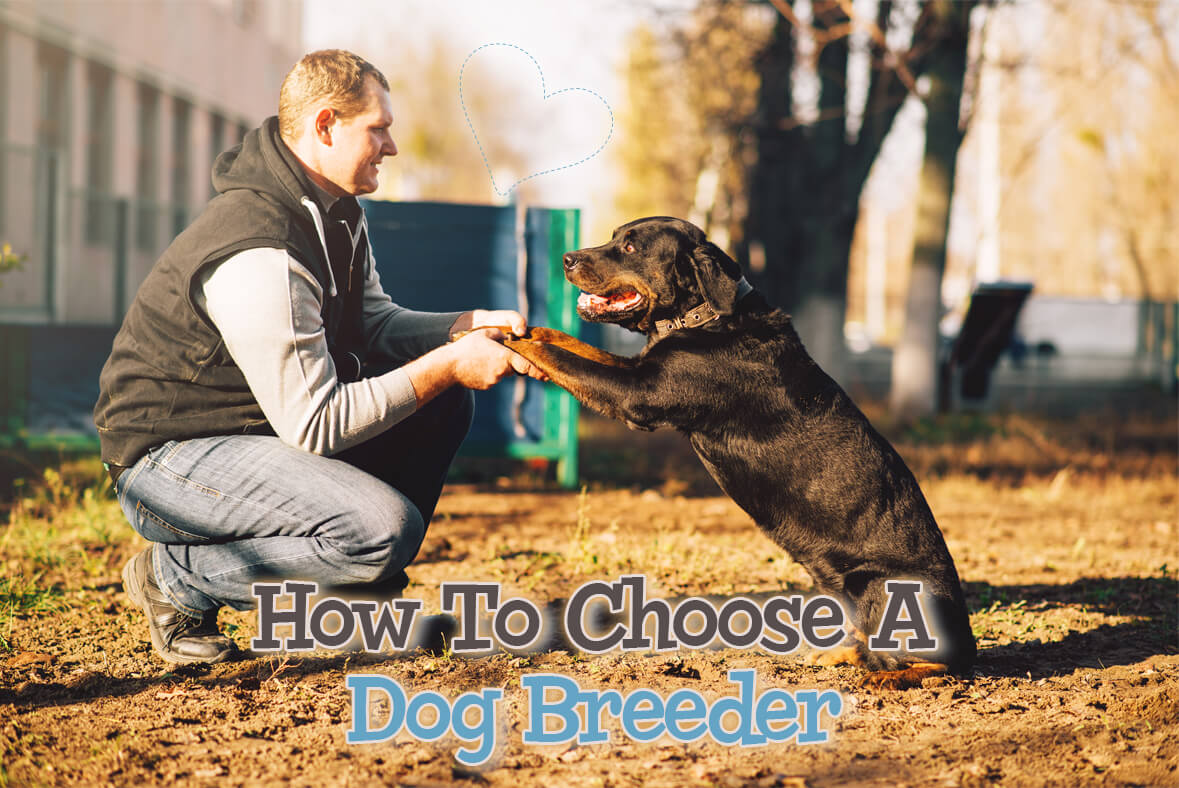 How To Choose A Dog Breeder