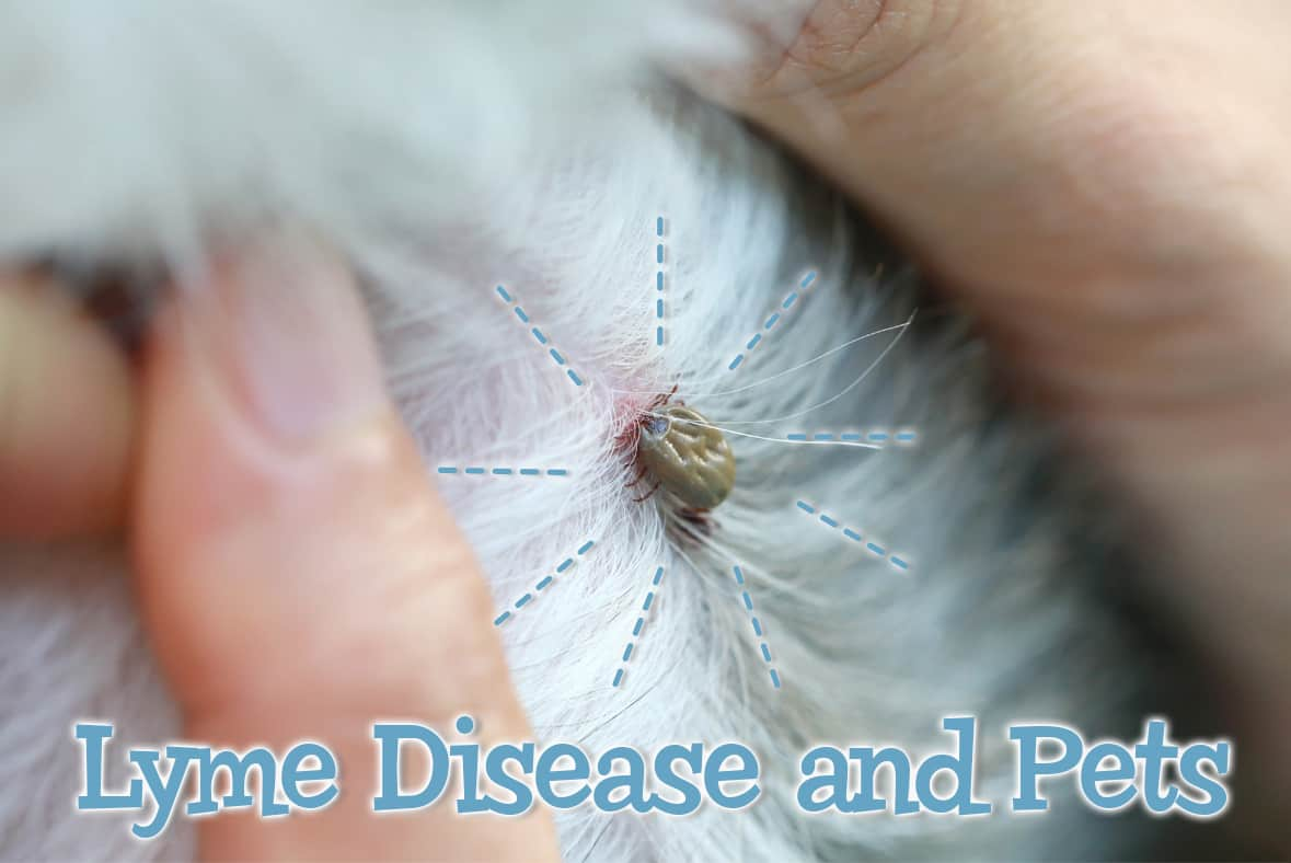 Prevention of Lyme's Disease in Dogs