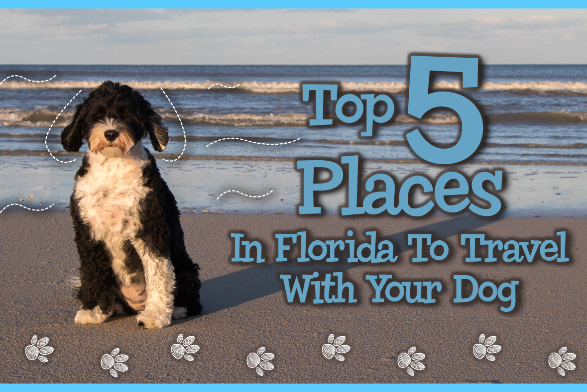 Top Five Places To Travel In Florida With Your Dog
