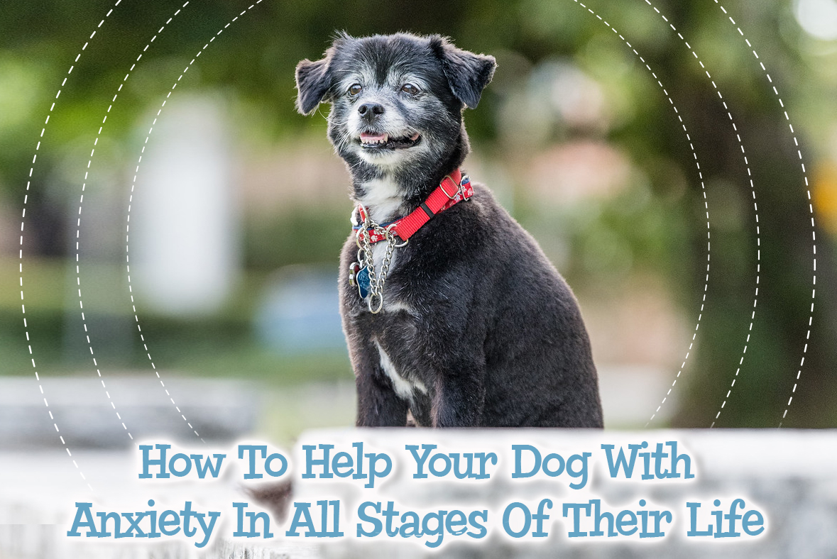 How To Help Your Dog With Anxiety In All Stages Of Its Life