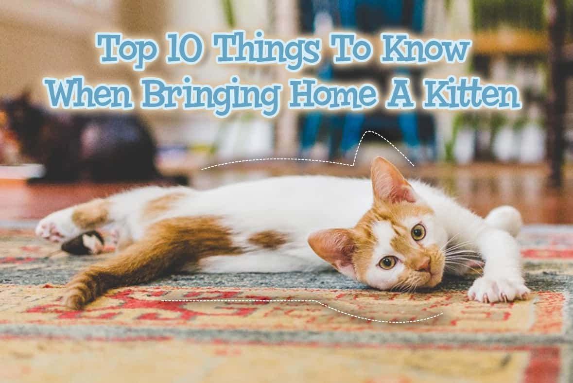 Top 10 Things To Know When Bringing Home A Kitten