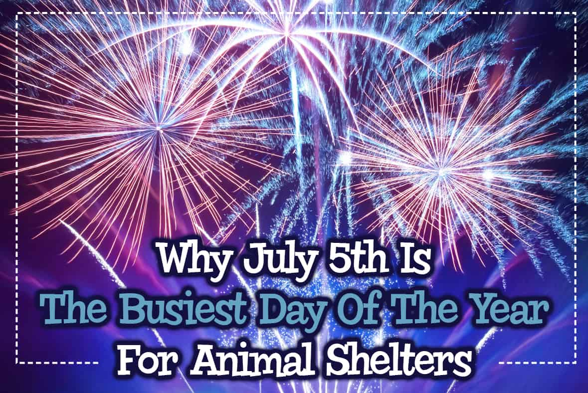 Why July 5th Is The Busiest Day Of The Year For Animal Shelters