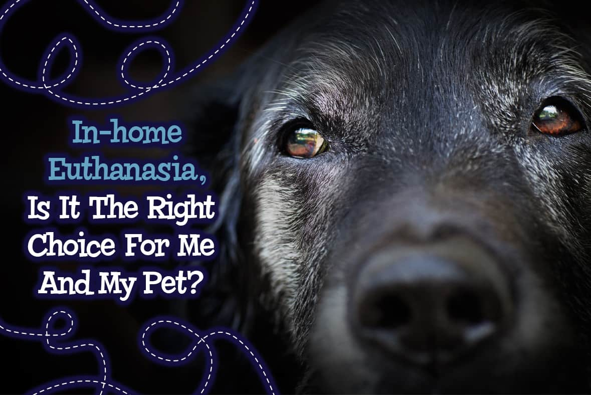 In-home Euthanasia, Is It Right For Me And My Pets?