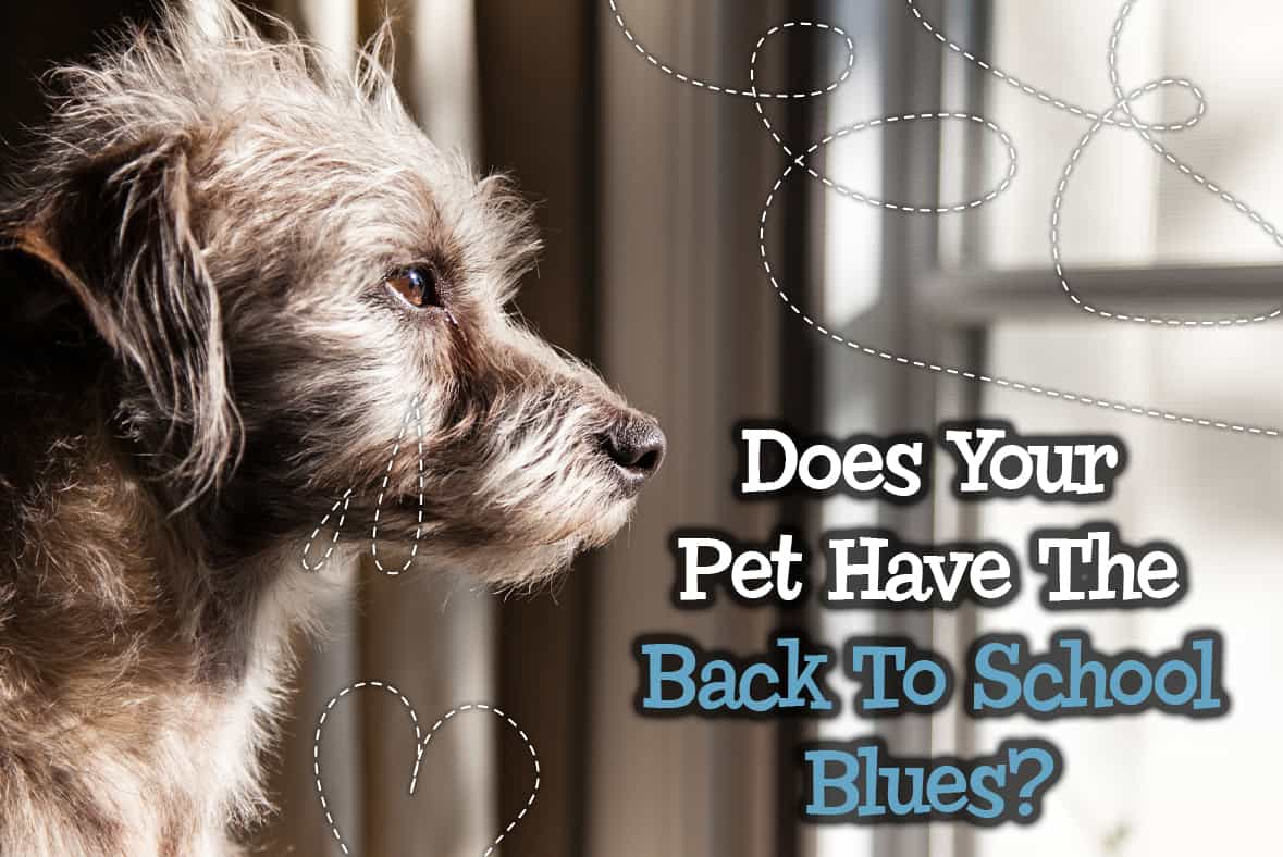 Does Your Pet Have The Back To School Blues?